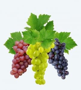 Grapes export